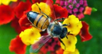 As abelhas e o desapego