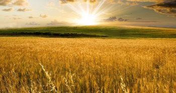 Sua marca jurídica e os campos de trigo