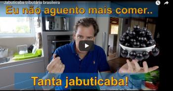 Jabuticaba tributária brasileira